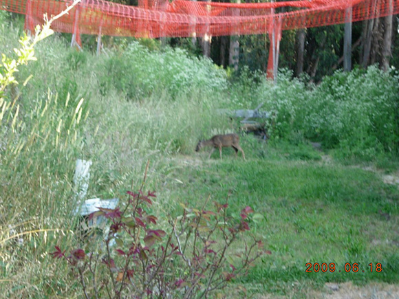 Here at the beautiful Seva Ashram there are some new guests.Can you see the deer?